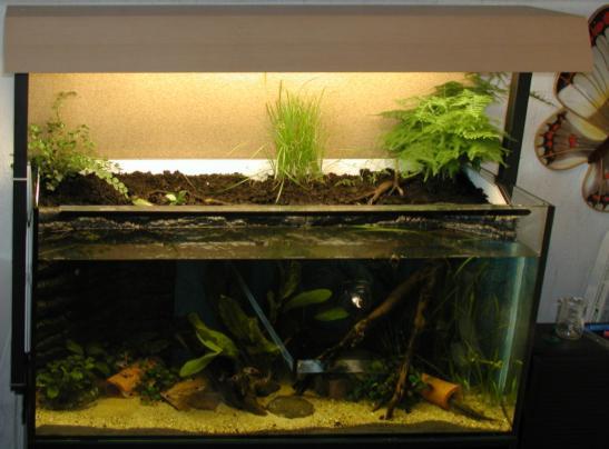 aquarium terrarium kombination
